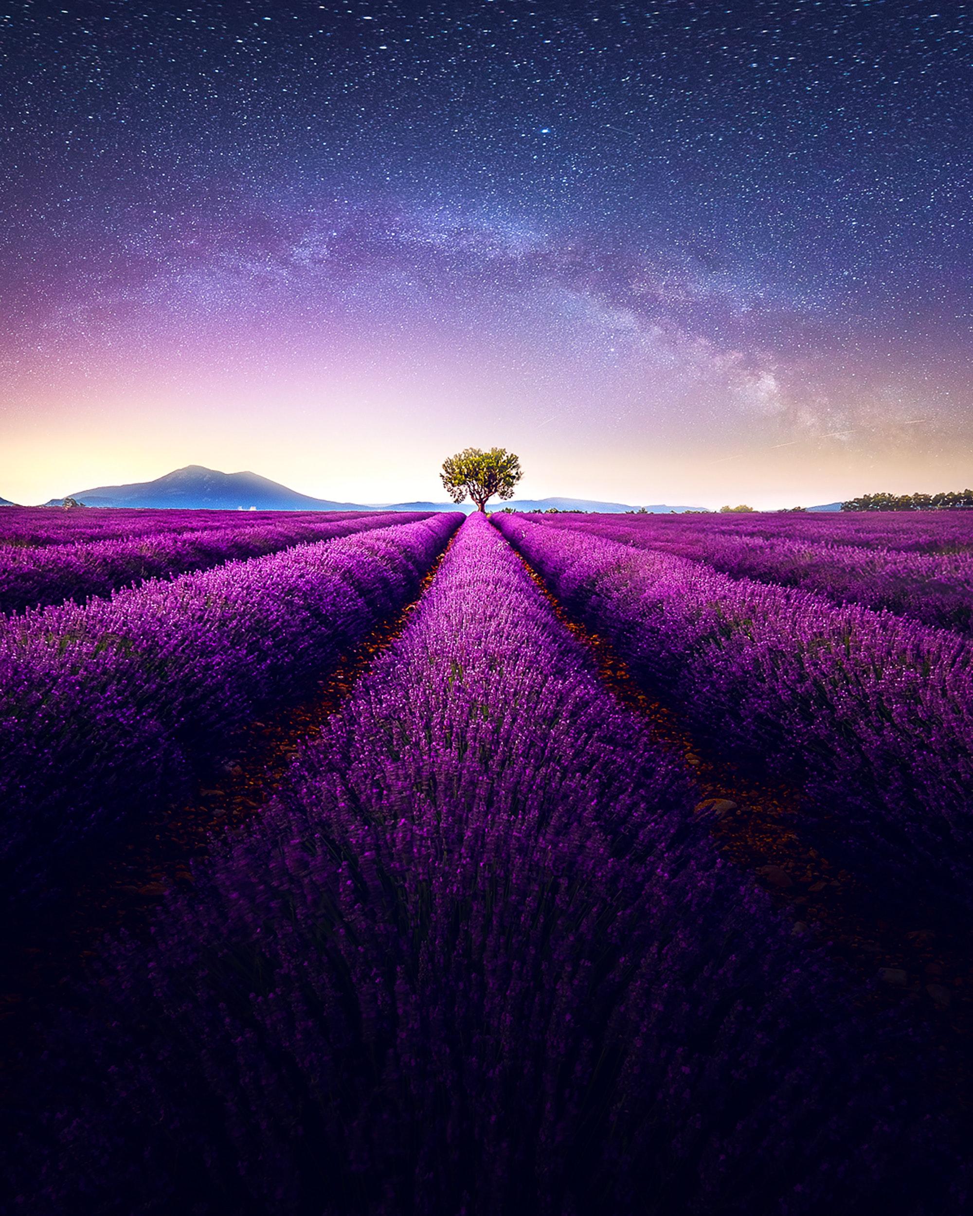 Ein Sternhimmel über einem Lavendelfeld